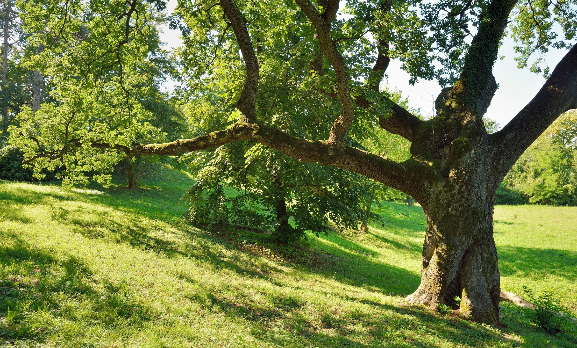 Tree-Service-Removal-Pruning