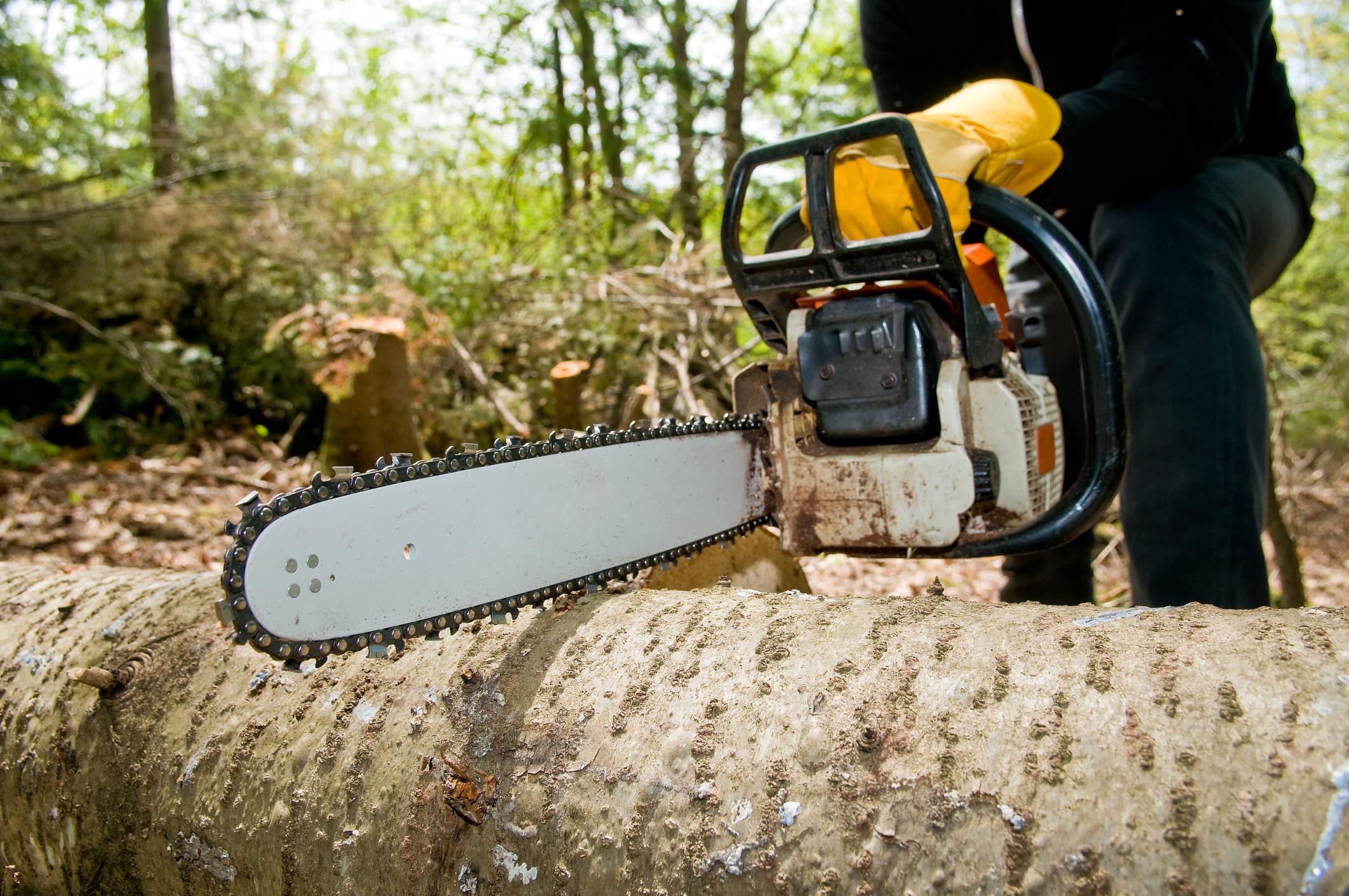 tree-service-perkasie